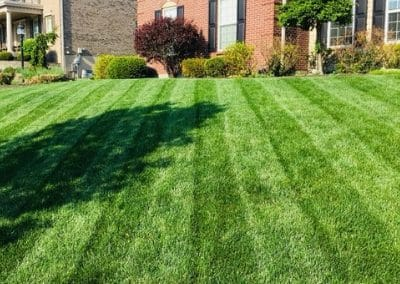 affordable lawn care near me