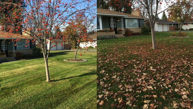 Fall Clean Up Lawn Care Service