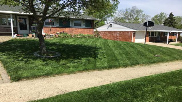 House front with lawn care and pruning
