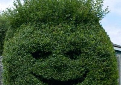 shrub needs pruning