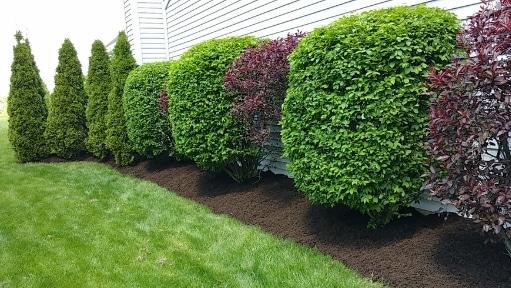 shrub pruning service mason oh
